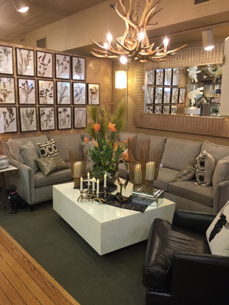 sofas on diva the ultimate design studio furniture store showroom in georgetown tx. Black Bedroom Furniture Sets. Home Design Ideas